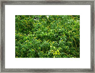 A Wall Of Spring Framed Print
