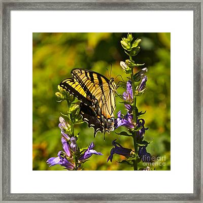 A Warm September Day In The Garden Framed Print