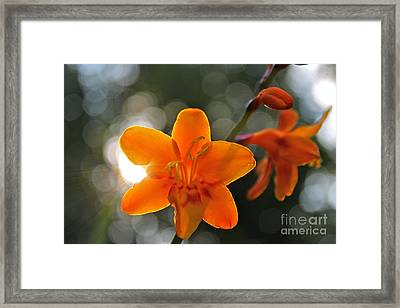 A Warm Thought Framed Print by Jay Nodianos