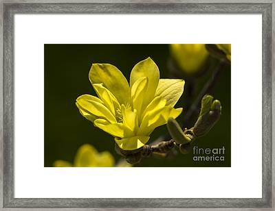 A Warm Welcome... Framed Print