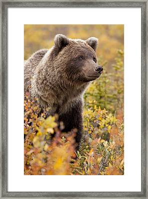 A Wary Glance Framed Print by Tim Grams