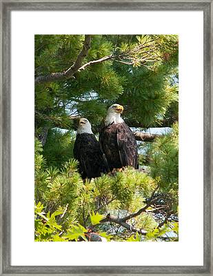 A Watchful Pair Framed Print by Brenda Jacobs