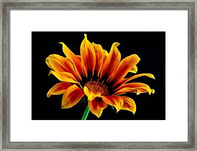 Framed Print featuring the photograph A Waving Flower by Marwan Khoury