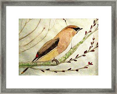 A Waxwing In The Orchard Framed Print