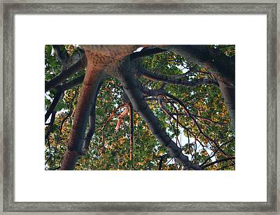 A Web Of Branches Framed Print by Kiros Berhane
