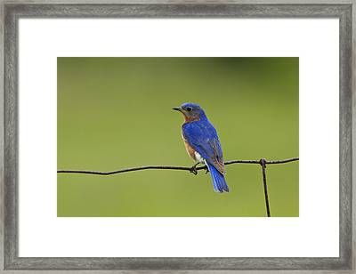 Framed Print featuring the photograph A Well Deserved Rest by Gary Hall