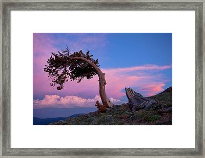 A Westerly Wind Framed Print by Jim Garrison