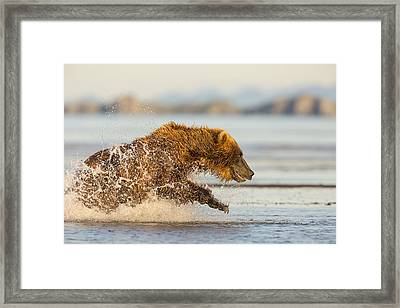 A Wet And Wild Chase Framed Print by Tim Grams