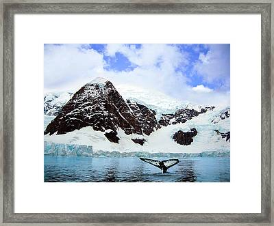 A Whale Fluke In Front Of Snow Covered Framed Print