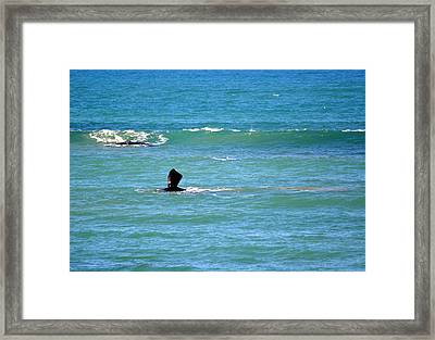 A Whale Of A Time Framed Print