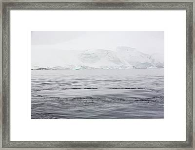 A Whales Footprint Framed Print by Ashley Cooper