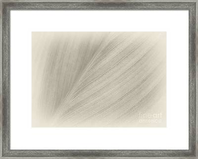 A Whisper Of A Leaf Framed Print by Sabrina L Ryan