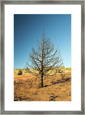 A Wild Fire Near Hawkins Peak Framed Print