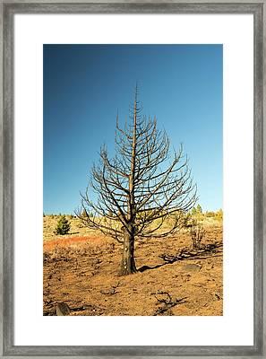 A Wild Fire Near Hawkins Peak Framed Print by Ashley Cooper