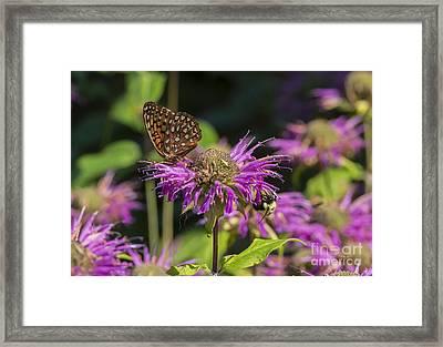 A Wild Garden Party Framed Print