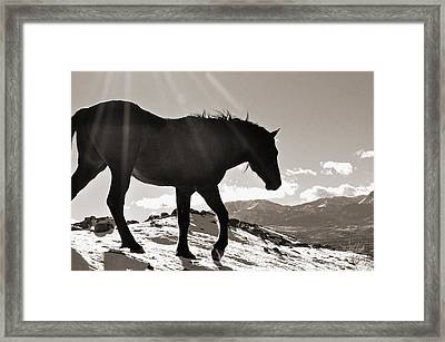 A Wild Horse In The Mountains Framed Print