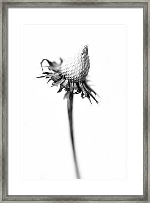 A Wilted Winter Flower Framed Print by Tommytechno Sweden