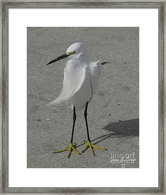 Framed Print featuring the photograph A Windy Day by Donna Brown
