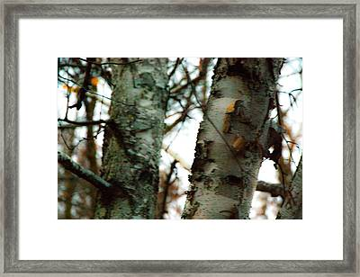 A Winter Conversation Framed Print