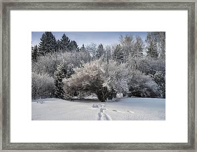 A Winter Day 2 Framed Print by Vladimir Kholostykh