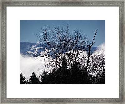 A Winter Day Reaching For The Sky Framed Print