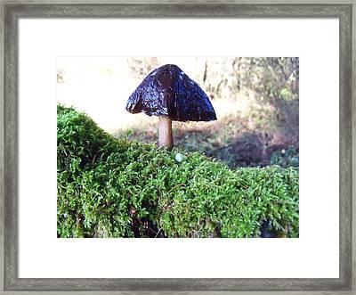 A Winter Mushroom Framed Print