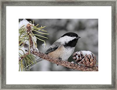 A Winter Perch Framed Print