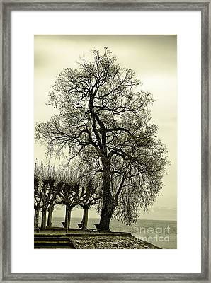A Winter Touch Framed Print