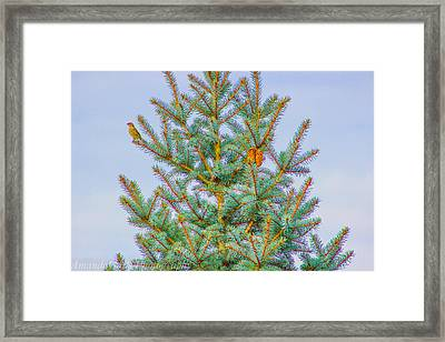 A Winters Day Framed Print by Amanda Spivey