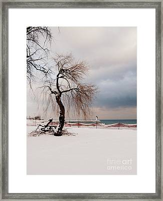 A Winter's Day On Lake Ontario Canada Framed Print by Avis  Noelle