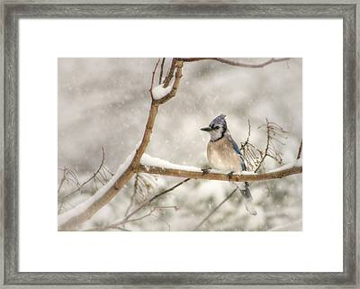A Winter's Day Framed Print by Lori Deiter