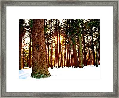 A Winters Day   Framed Print by Rick Todaro