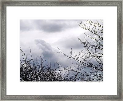 Framed Print featuring the photograph A Winter's Day by Robyn King