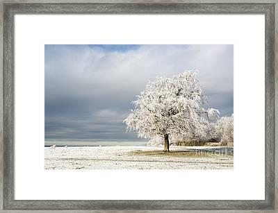 A Winter's Morning Framed Print by Anne Gilbert