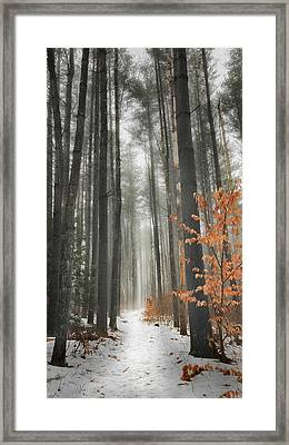 A Winters Path Framed Print by Bill Wakeley