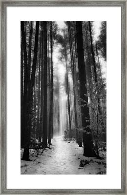 A Winters Path Black And White Framed Print by Bill Wakeley