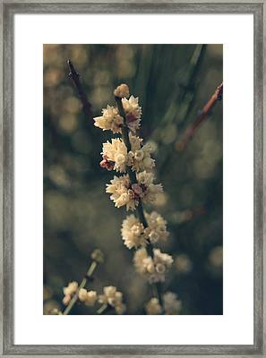 A Wish For You Framed Print by Laurie Search