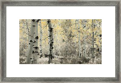 A Wisp Of Gold Framed Print