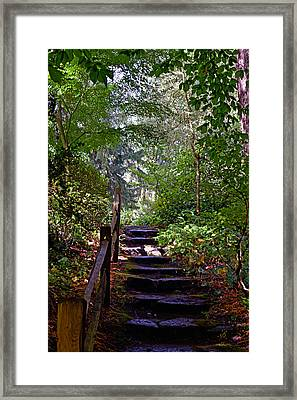 Framed Print featuring the photograph A Wooded Path by Anthony Baatz
