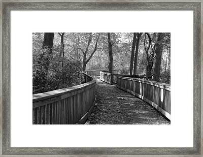 A Wooded Path Framed Print