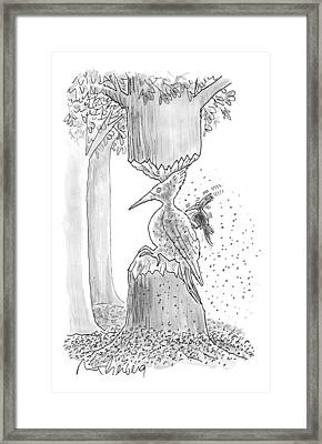 A Woodpecker Is Using His Beak To Carve Is Own Framed Print