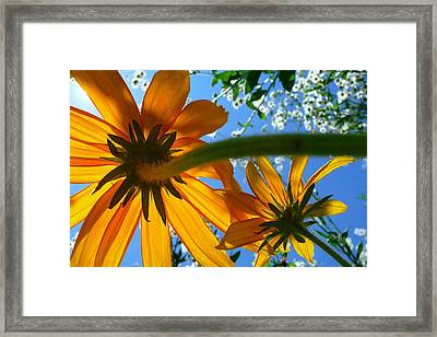 A Worms Eye View  Framed Print by Dan Myers