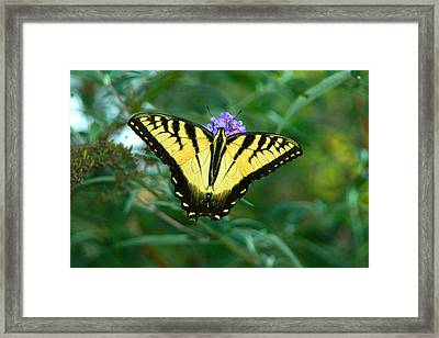 A Yellow Butterfly Framed Print by Raymond Salani III