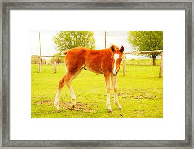 A Young Foal Framed Print by Jeff Swan