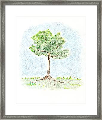 A Young Tree Framed Print