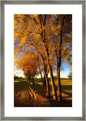 Aahctober Framed Print by Phil Koch