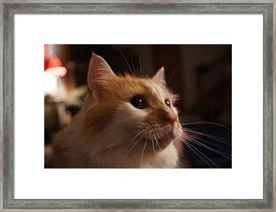 Aarik The Great Framed Print by Kimberly Weninger