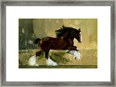 Clydesdale Stallion Framed Print by Don  Langeneckert