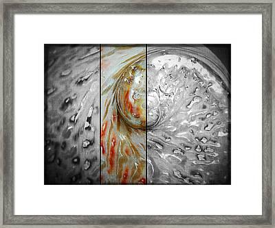 Abalone Framed Print by Bettina Clark