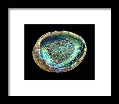 Abalone Framed Prints